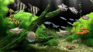 dream-aquarium-screensaver-01-700x448