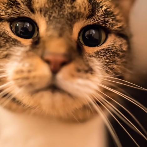 cat-1109102_960_720